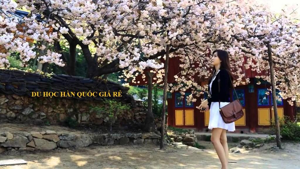 Du học Hàn Quốc giá rẻ tại Halo Education