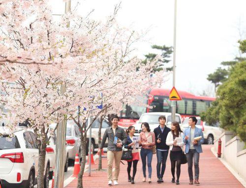 Du học trường Sasada ( Hàn Quốc )