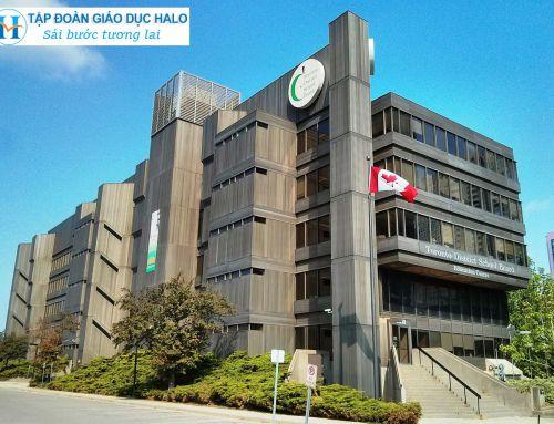 Hấp dẫn học bổng dành cho bạn với Toronto School