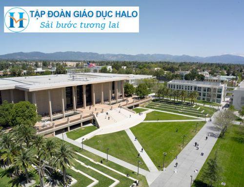 USA News: California State – Đại học lớn nhất nước Mỹ